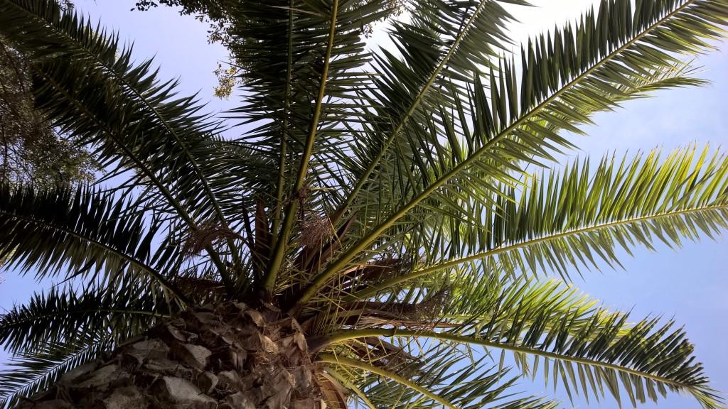 palm-verti