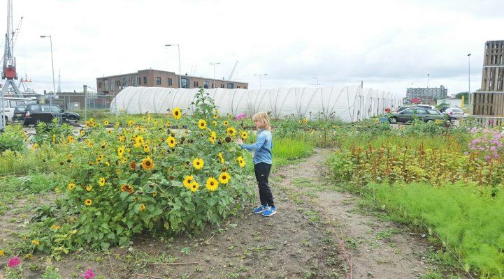 Talks & Treasures - Pluktuin in Fruithaven - Uit je eigen stad