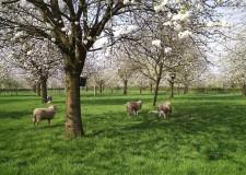 Talks & Treasures-bloesem meivakantie Zuid Limburg