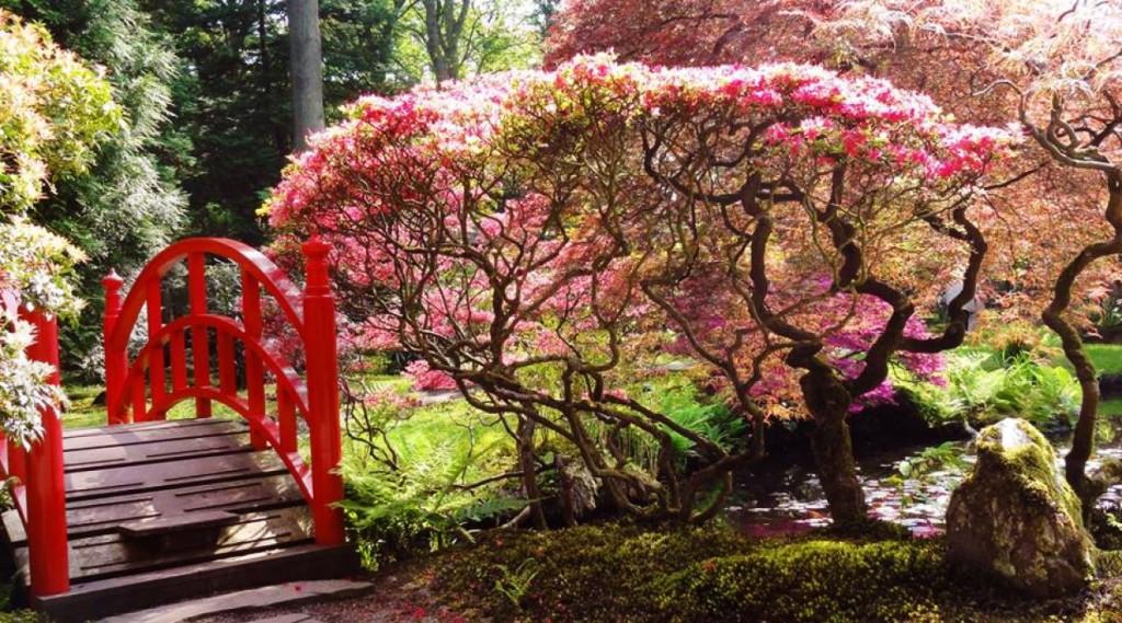 Talks & Treasures - bloesem meivakantie Japanse Tuin