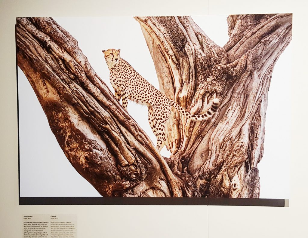 Talks & Treasures - Frans Lanting Dialogues with Nature
