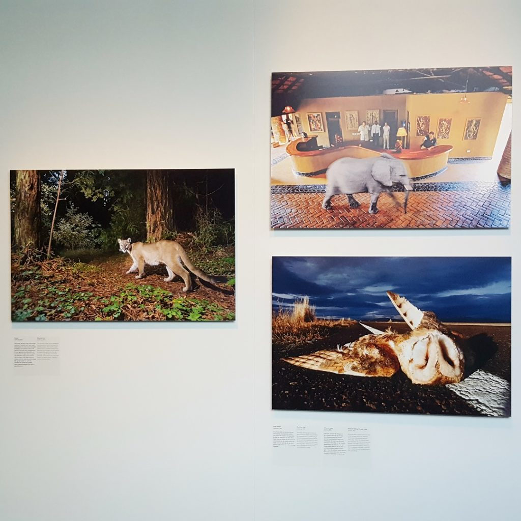 Talks & Treasures - Dialogues with Nature Frans Lanting