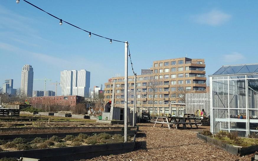Talks & Treasures - Afrikaanderwijk Rotterdam - groene en gezellige hotspots 4
