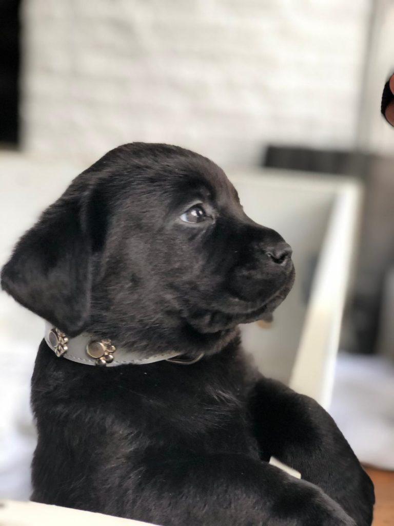 New kid in town - puppy love