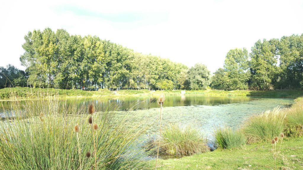 Eiland Brienenoord: groene oase in Rotterdam