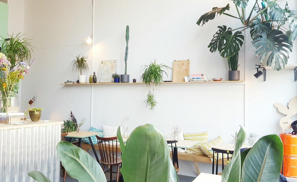 Afrikaanderwijk Rotterdam: groene en gezellige hotspots