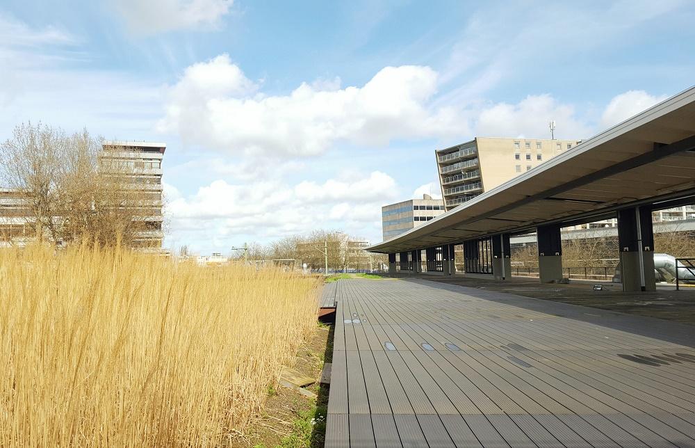 Hofbogen Rotterdam: nieuwkomers en dakdromen