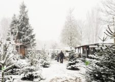 alks & Treasures - winterwonderland tips Rotterdam en weekendlinkjes