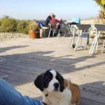 Talks & Treasures - Vlakbij Rotterdam eten aan zee? Deze toffe strandtenten zijn heel het jaar open
